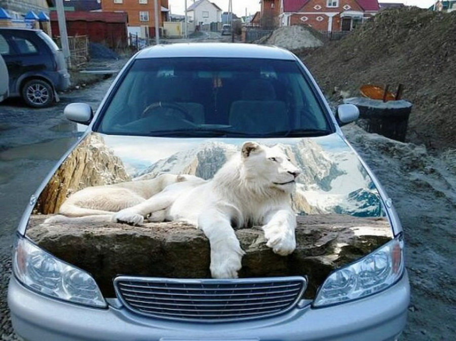 White-Lion-On-Car-Funny-3D-Art-Picture.jpg